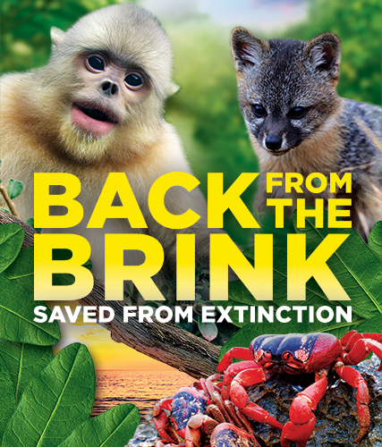 Back from the Brink: Saved from Extinction