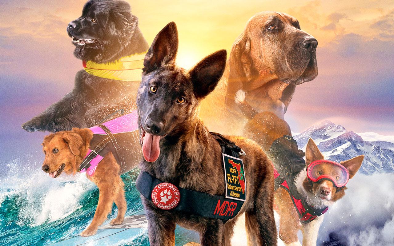 Meet the pups of