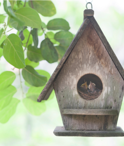 Turn your backyard into a bird hangout!