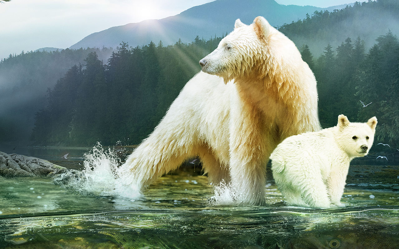 Enter the 'Great Bear Rainforest' in the DOME Theater, opening November 1!