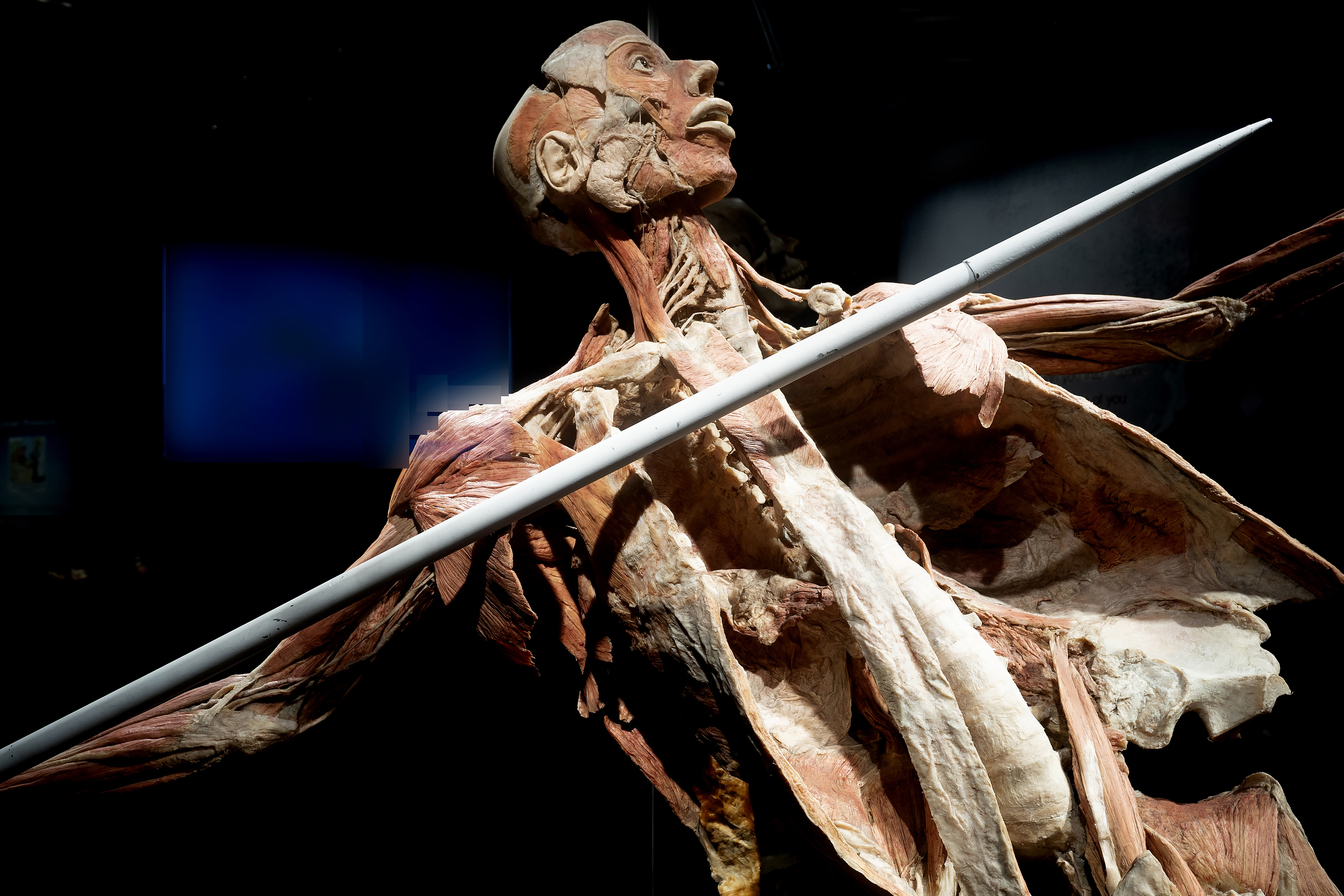Great Lakes Science Center to reopen with BODY WORLDS Rx premiere