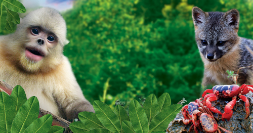New movie 'Back from the Brink: Saved from Extinction' opens February 8